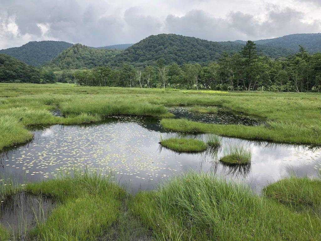 尾瀬の湿原と池塘
