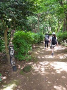 源氏山公園のアジサイの小径